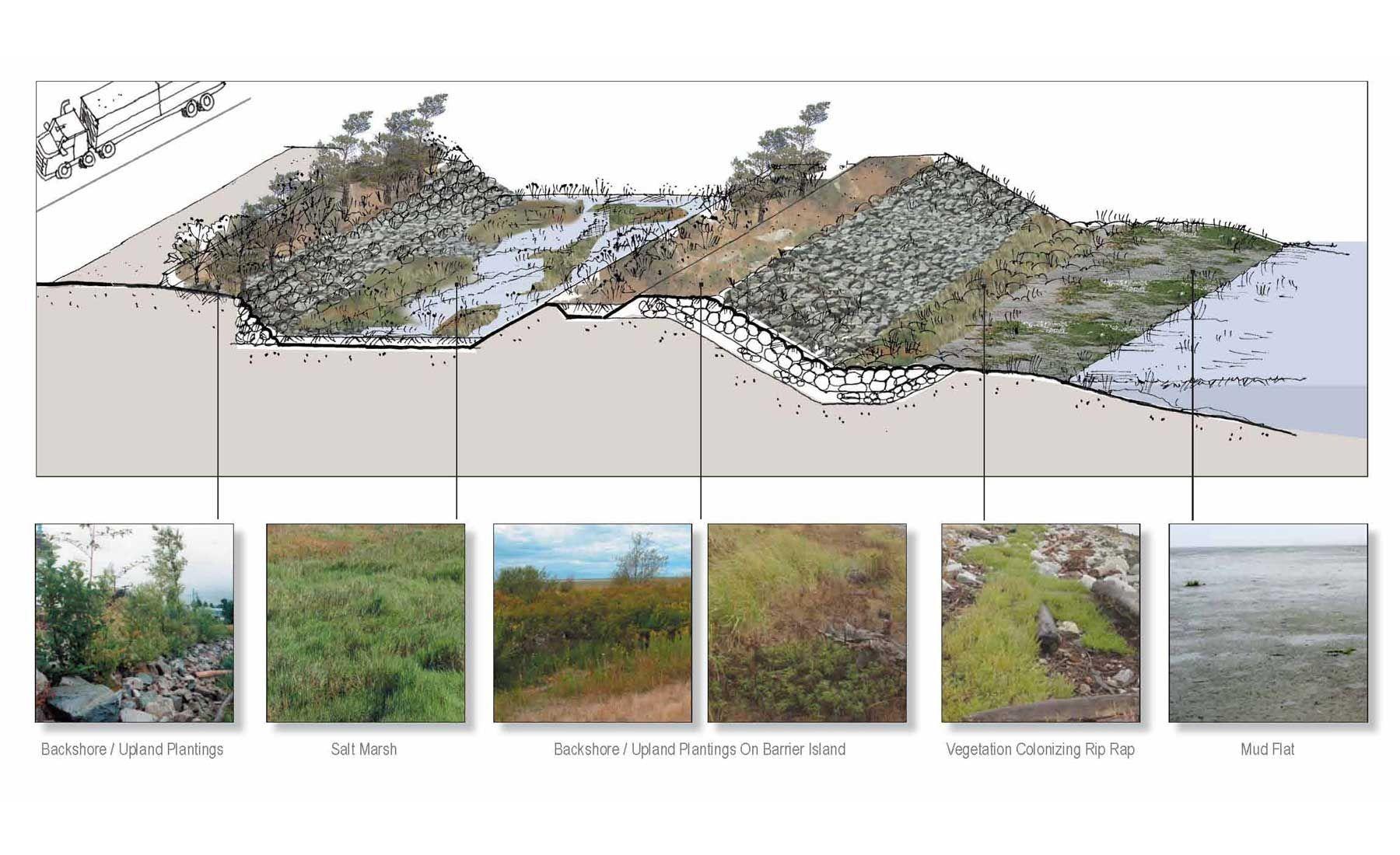 plant palette landscape architecture - Google Search   Diagrams   Pinterest   Architecture ...