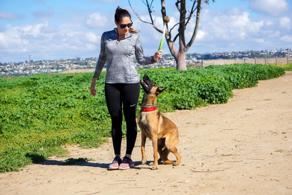 Tip tuesday offleash training puppy training dog