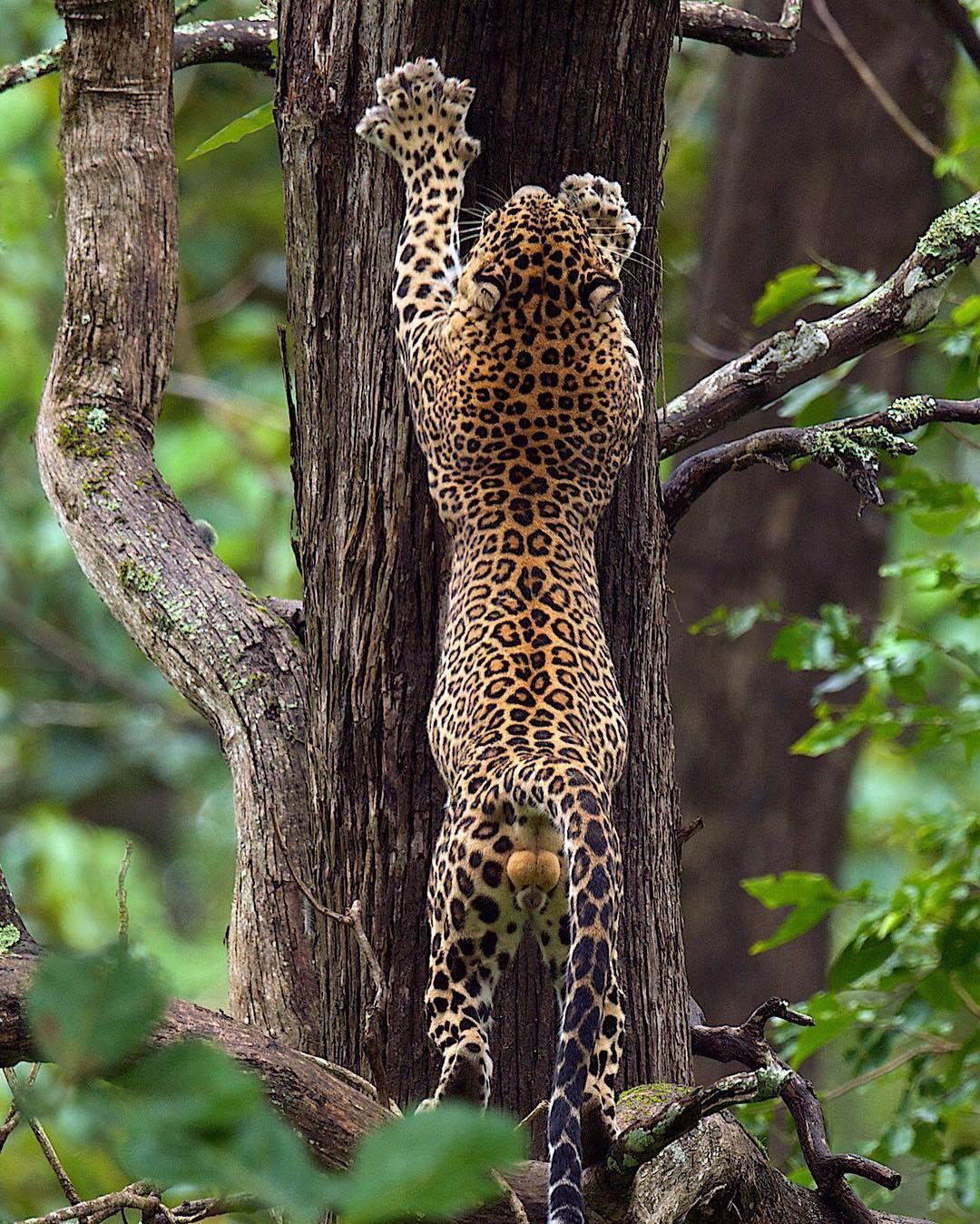 "wildlifeaddicts: ""I want you guys to follow @thomasvijayan  he is an amazing photographer  His account is full of amazing wildlife and animal content!  Make sure you follow @thomasvijayan right now!  #wildlife #travel #animal #cute #love #wildlifephotography #wildlifeaddicts"""