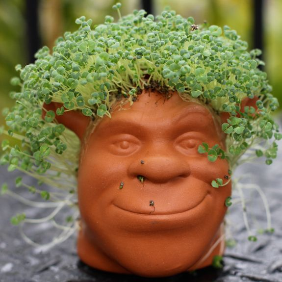 Something Green And Good To Eat My Chia Pet The Spicy Rd Chia Pet Chia Seeds Benefits Chia
