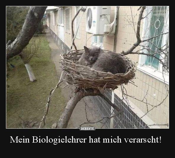 Mein Biologielehrer hat mich verarscht!..