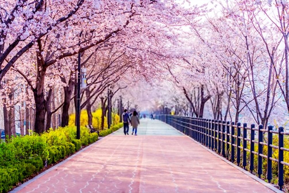 The Best Free Tourist Attractions In Seoul The Capital Of South Korea Travel Help Korea Tourist Attractions Korea Tourism South Korea Travel