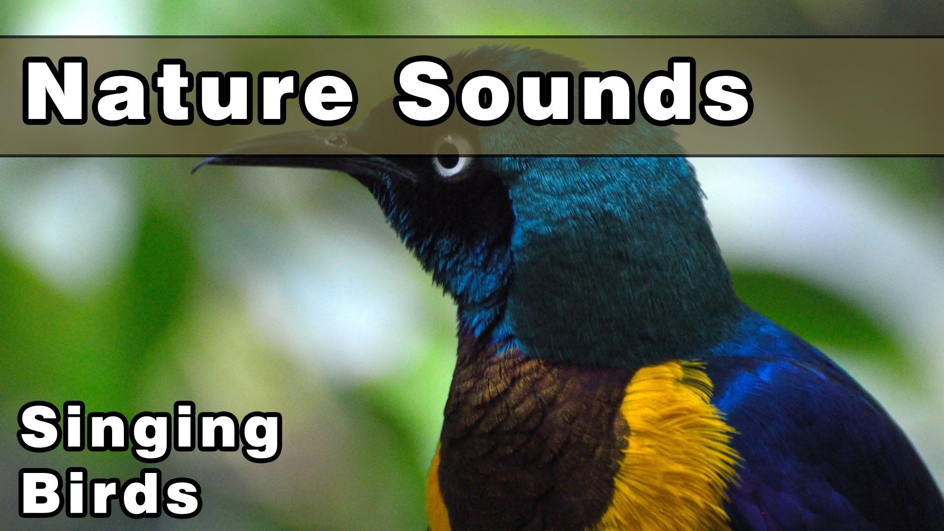 This video features 12 Hours of Singing Birds Nature Sounds