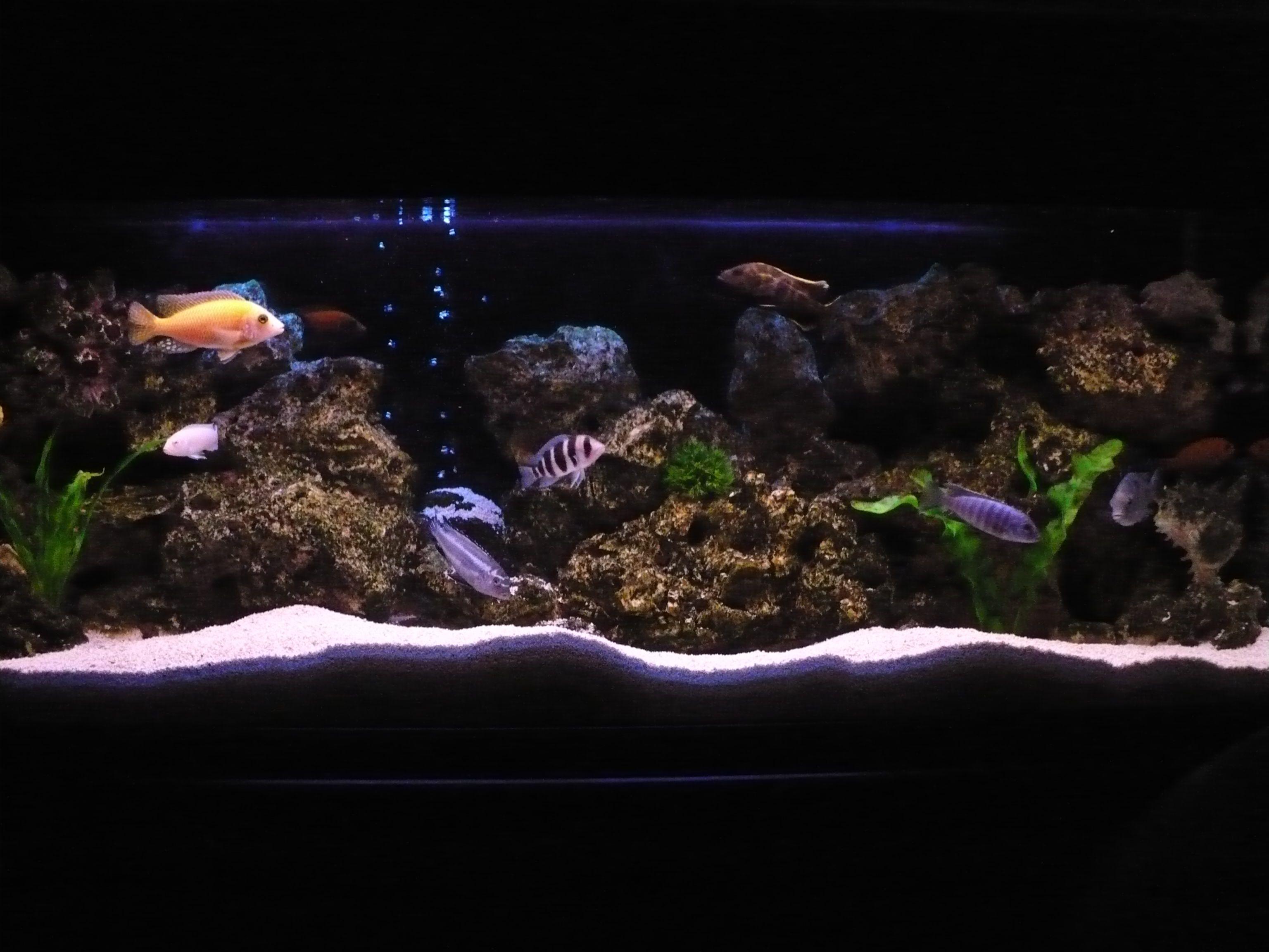 cichlids.com: Tank examples | African Cichlids Aquarium ...