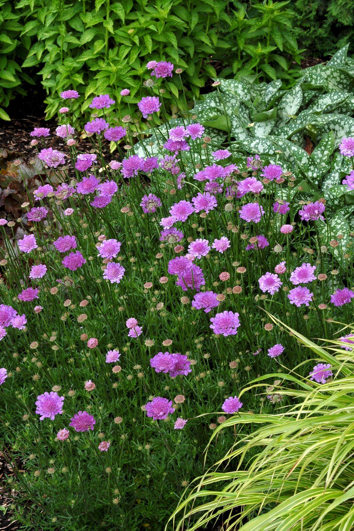 Pin By Robin Branhan On Gardening And Yard Ideas Pinterest