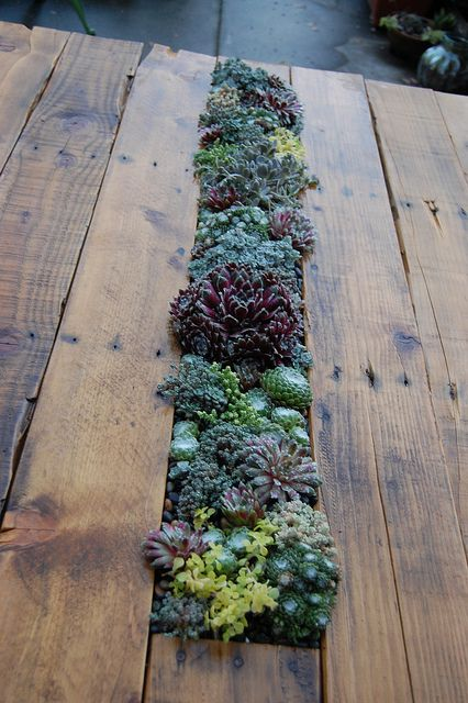 Add a recessed panel of succulents to the middle of a DIYed table for an instant centerpiece that will never wilt. Learn how to make it with Farout Flora.