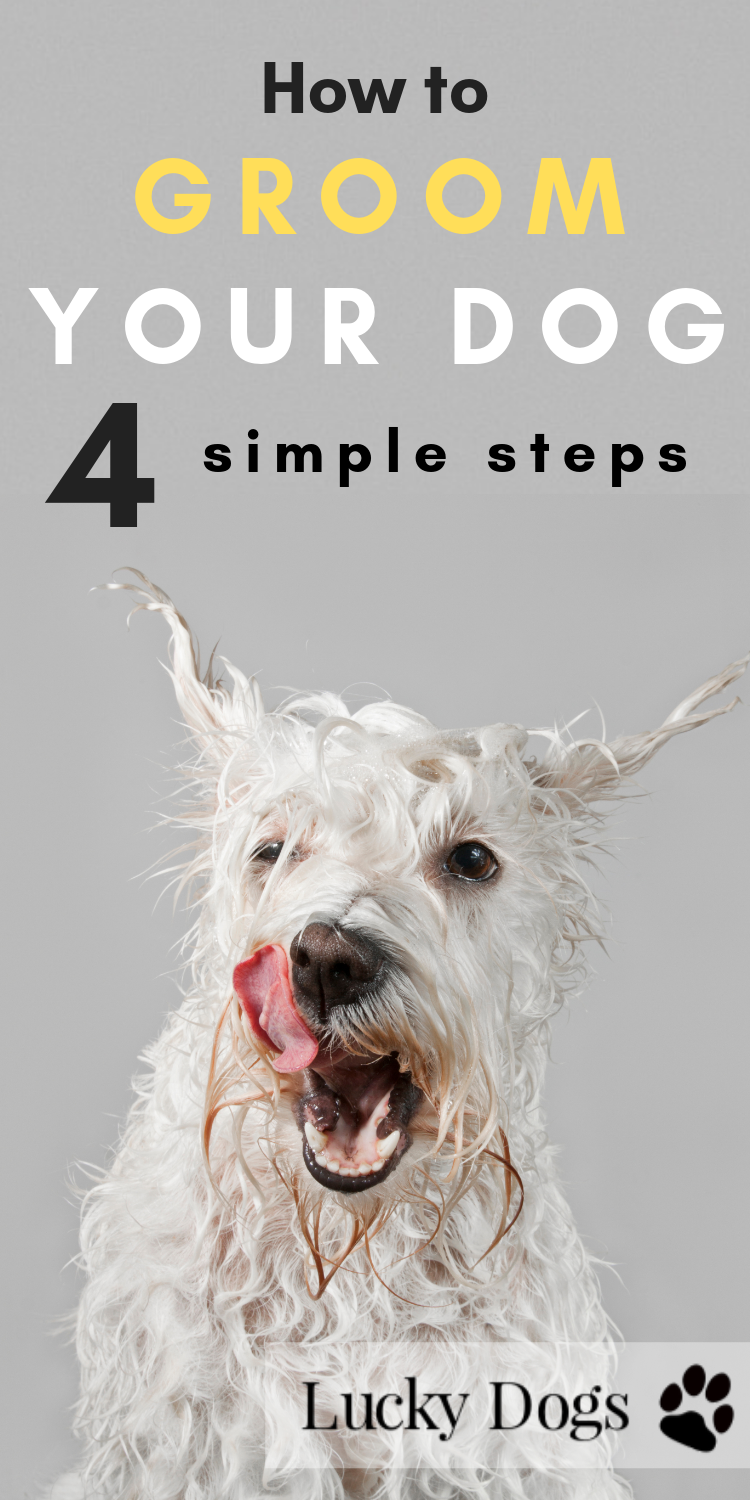 How to Groom your Dog at Home 4 Simple Steps Dog