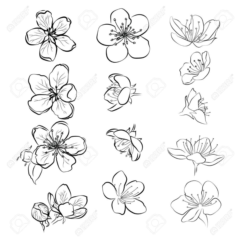 Set Of Cherry Blossoms Collection Of Flowers Of Sakura Black Flower Art Drawing Linear Art Cherry Blossom Art