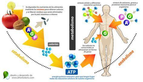 Reguladores del metabolismo