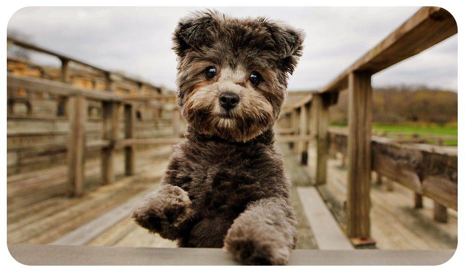 About Adrian Hitt Photography » Dog Photographer Adrian Hitt Commercial Pet Photographer Stock