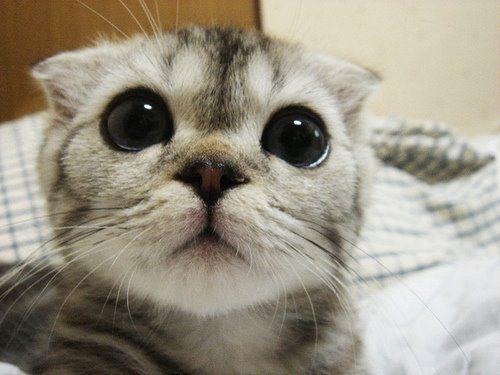 Pin Von Vanessa Godoy Auf Pet Heaven Niedliche Katzchen Susseste Haustiere Seltsame Katzen