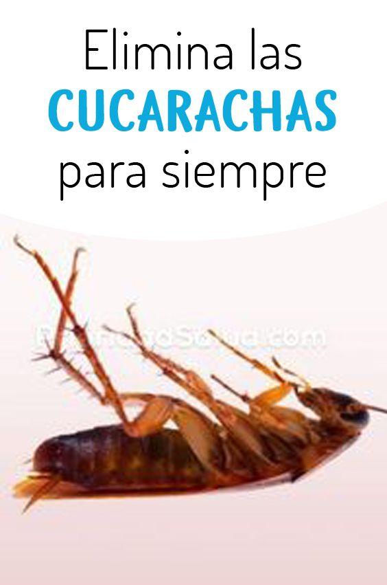 Trucos Simples Para Eliminar Las Cucarachas Por Siempre Recetas