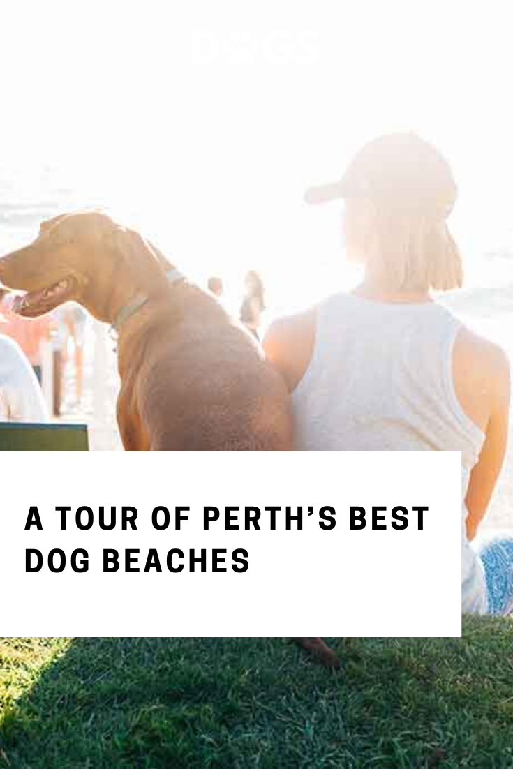 Pin On Dogs Of Perth