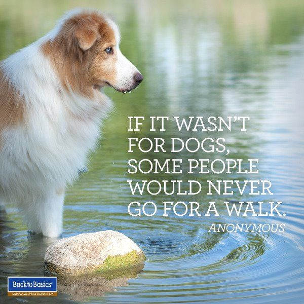 If it wasn\'t for dogs, some people would never go for a walk. | For ...