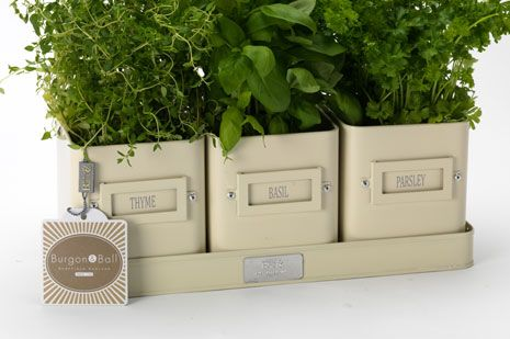 Nice Herb Pots In A Tray   Jersey Cream