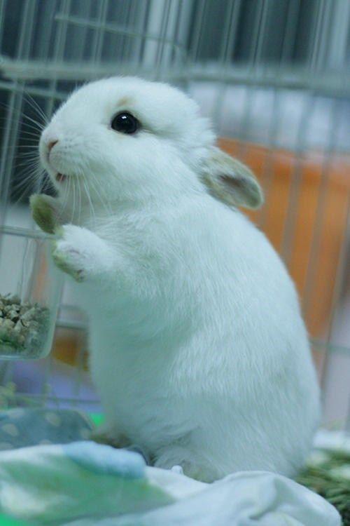 El conejo de los huevitos de Pascua!!