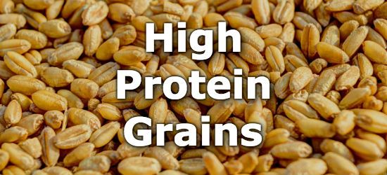 Top 10 Grains Highest in Protein Bad carbohydrates