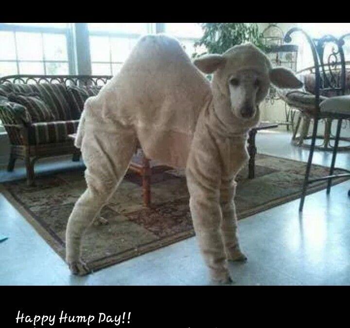 My lovely lady humps