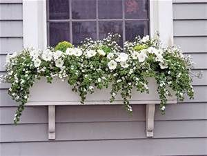 and greens we give display ideas that ideas for winter window boxes ...