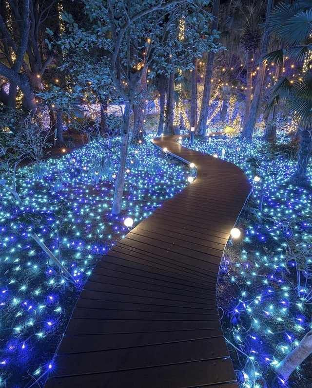 A fairytale forest