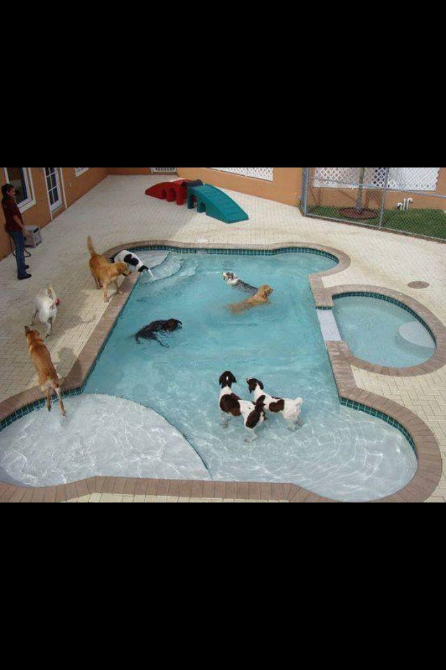 Dog Pool Dog Daycare Dog Swimming Pools Dog Houses