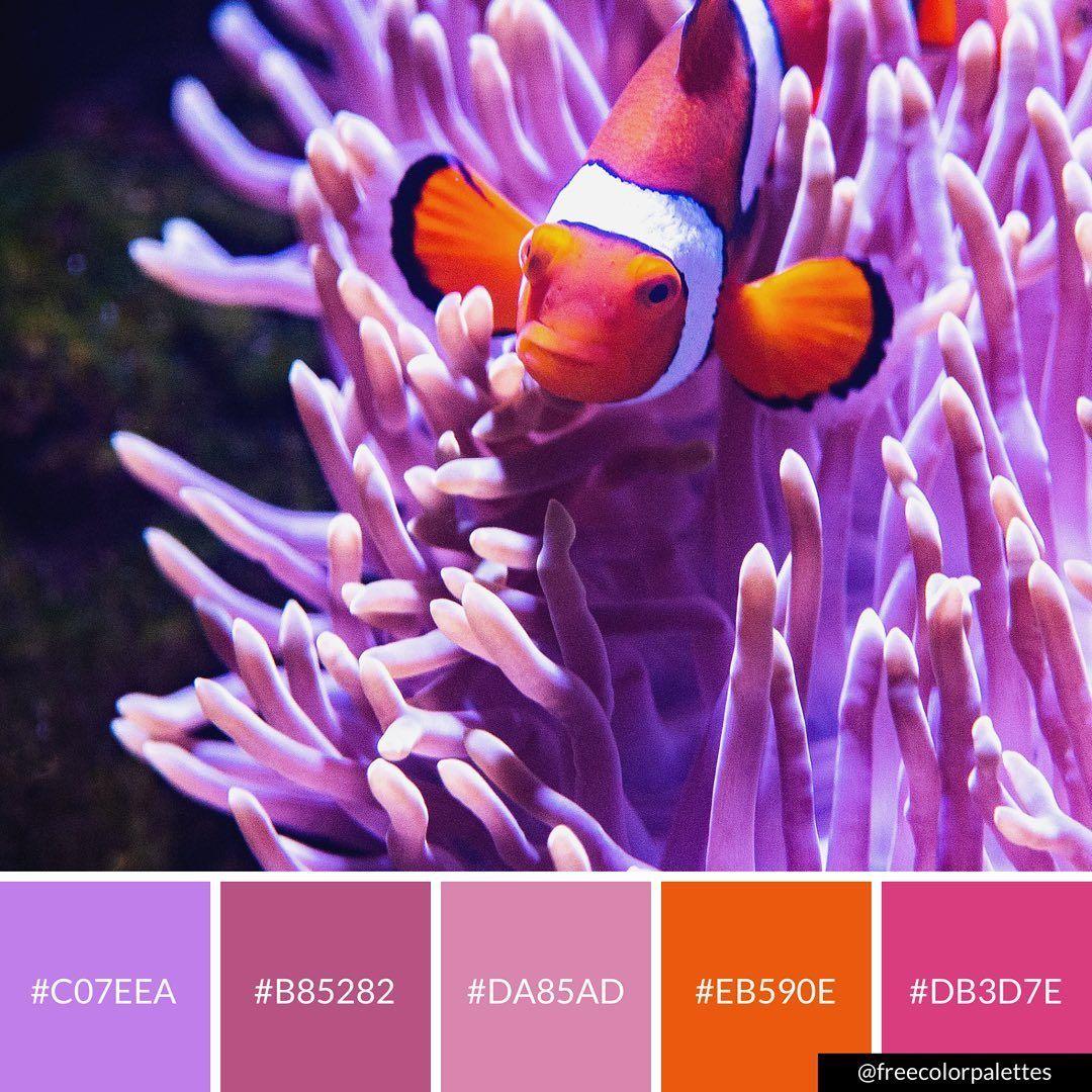 Clownfish Bright Pink Orange and Purple Color Palette