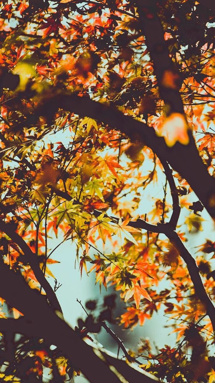 september wallpaper  Tumblr  Autumn  Autumn leaves wallpaper, Fall wallpaper ve Iphone