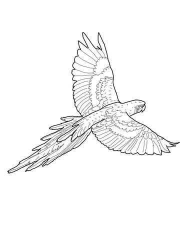 Flying Red And Green Macaw Coloring Page Bird Coloring Pages