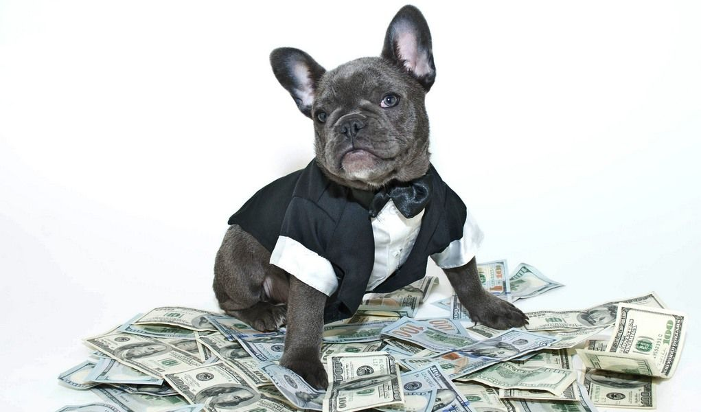 How Much Does It Cost to Groom a Dog? Dog tuxedo, Dogs