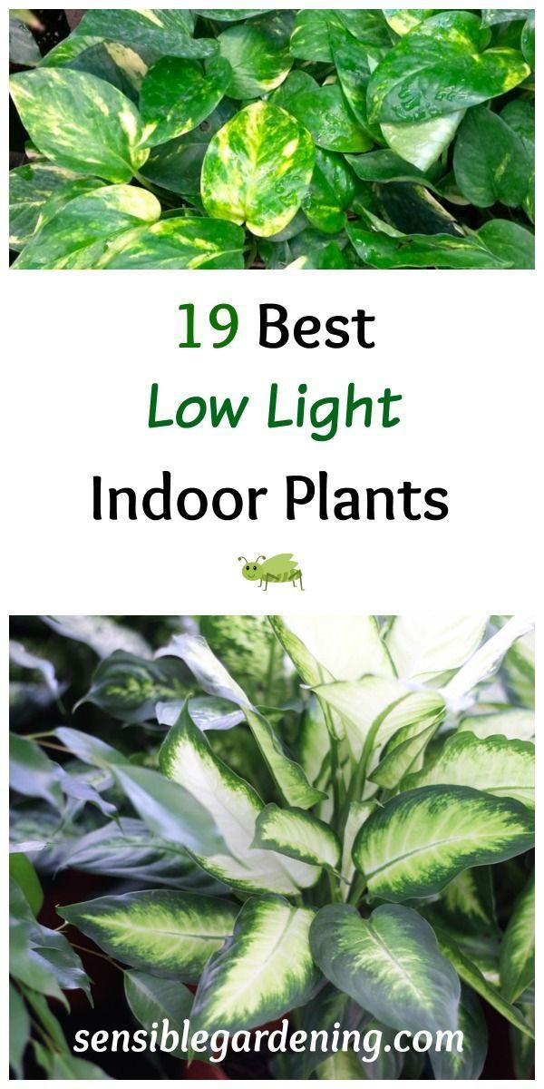 19 Best Low Light Indoor Plants Gardening Ideas Diy On 400 x 300