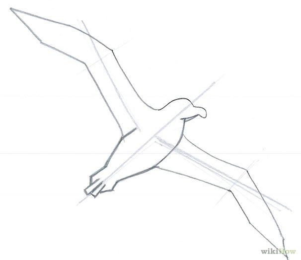 Como Dibujar Un Albatros Como Dibujar Dibujos De Aves Dibujos Infantiles