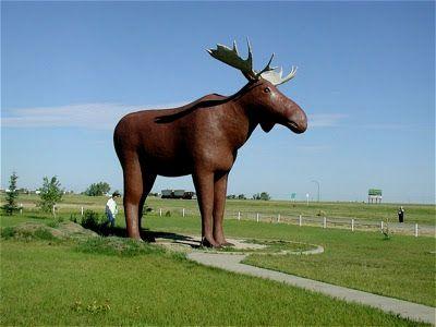 The Moose Jaw Moose  Google Image Result for http://3.bp.blogspot.com/_vhr55L8oMfE/SZrU5ahdcHI/AAAAAAAADsI/q5Au-y4sJmU/s400/Moose+in+Moose+Jaw,+Saskatchewan.jpg