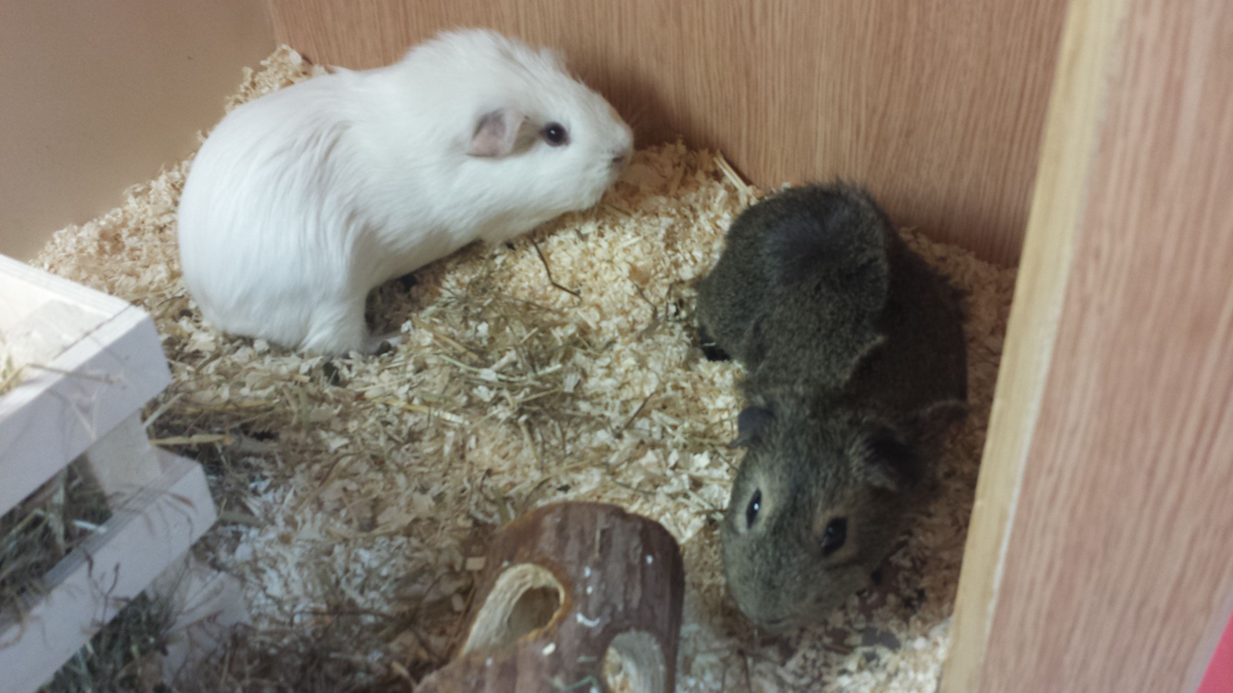 Milo And Tony Are Looking For A Forever Home To Call Their Own In Our Doncaster Thorne Adoption Centre Can You Offer Them The Home Tha Adoption Pets Rehoming