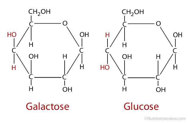 Galactose Gal Combined W Glucose Through A Condensation