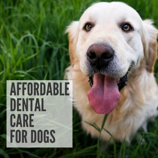 The Cheapest Way to Keep Your Dog's Teeth Clean #dentalcare