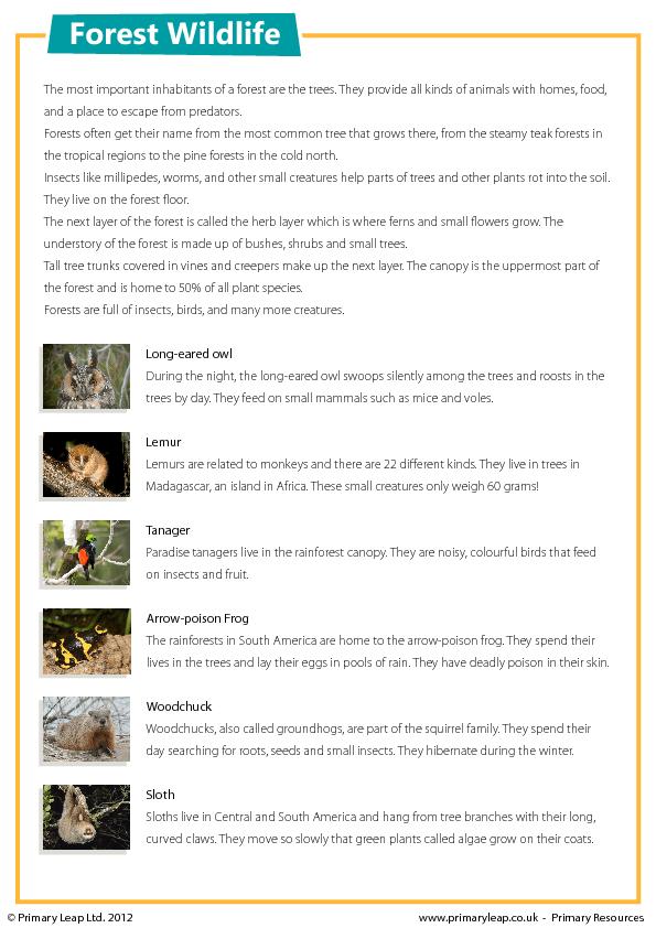 Forest Wildlife Reading Comprehension Forest And Wildlife Reading Comprehension Comprehension Worksheets