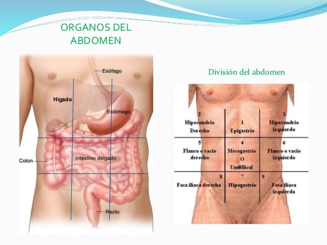 DIVISION DEL ABDOMEN PDF DOWNLOAD