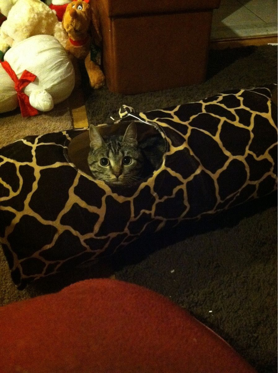 Creeper Cat. cute cats