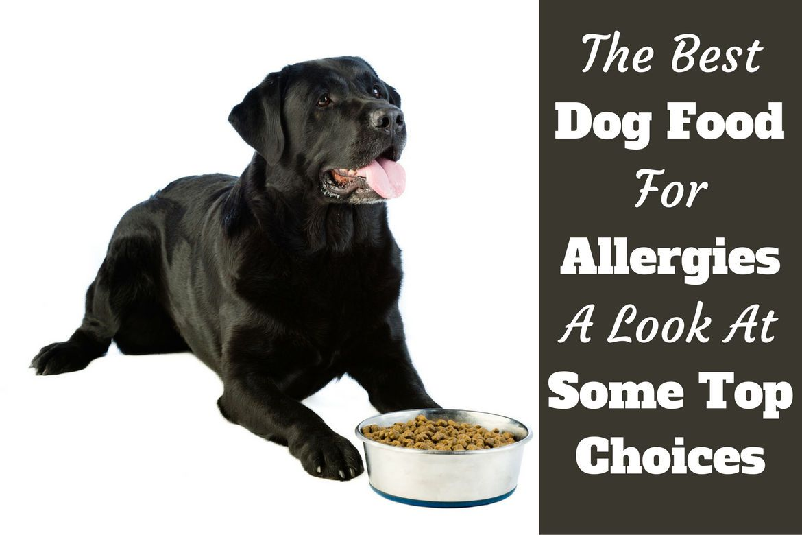 Best Dog Food For Allergies Overall Best Hypoallergenic Dog Food
