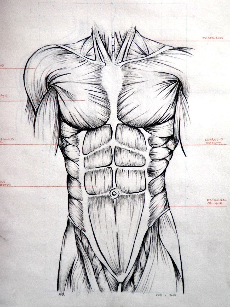 Drawing. Abdominal muscles. | Art foundation | Pinterest