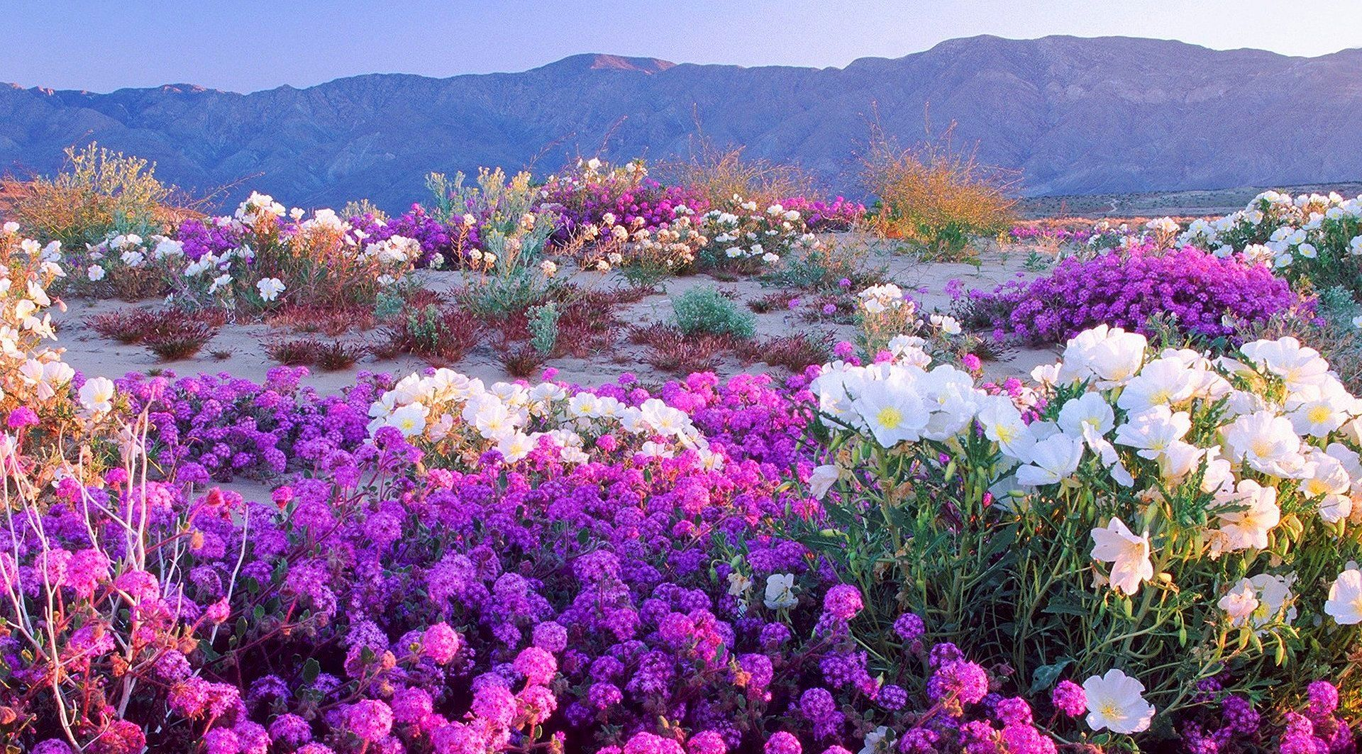 landscape photography flowers. mountain landscape photography google search flowers l