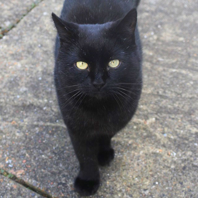 Black Cats Busting The Unlucky Myths Dignity Pet Crematorium Black Cat Day Black Cat Appreciation Day National Black Cat Day