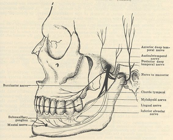 Diagrams of the Trigeminal Nerve | Trigeminal neuralgia | Pinterest