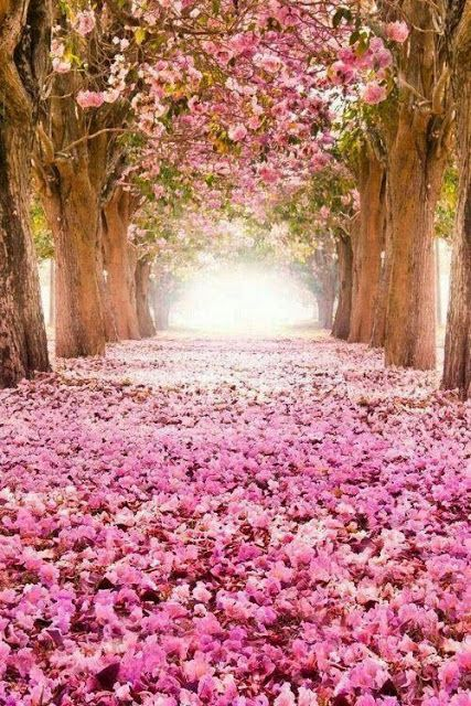 Funterest Is The World Of Funny Interesting Amazing Images And Clips Nature In Pink Color Nature Beautiful Tree Beautiful Nature