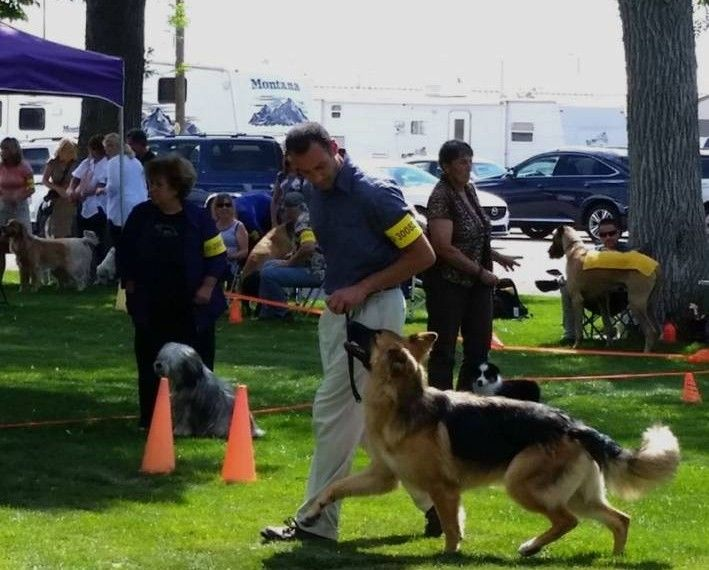 Ted Terroux Dog Training In Lakewood Colorado Image By