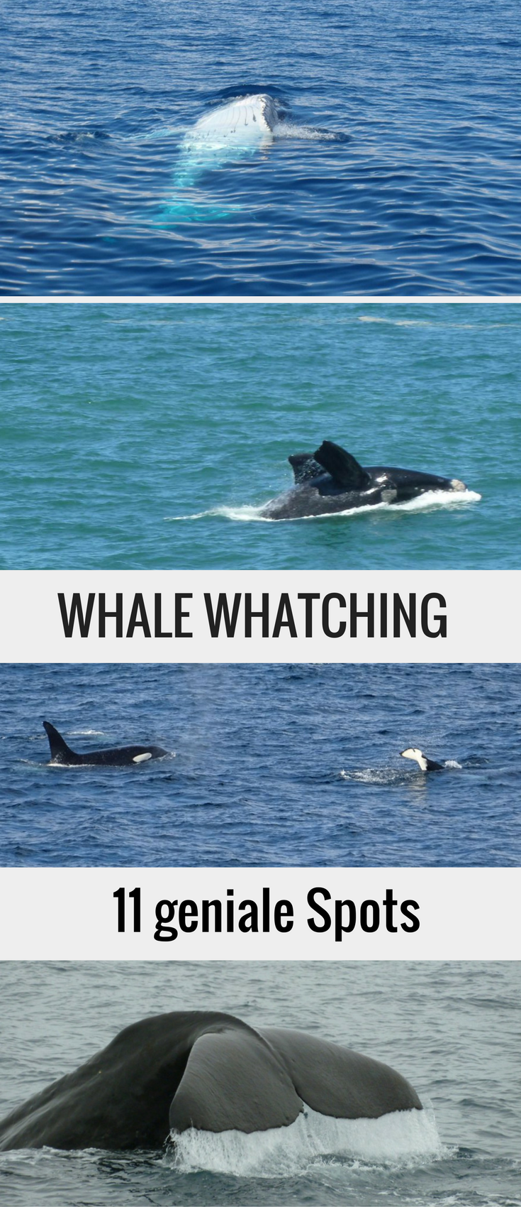 Wale beobachten: 11 Whale Watching Spots | Travelinspired ...