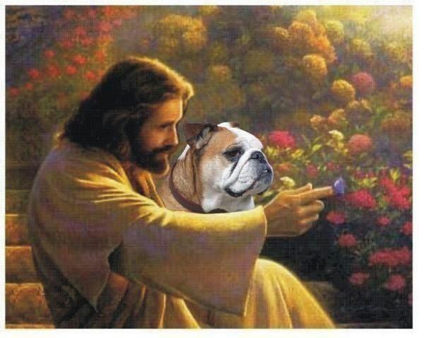Bully With Jesus English Bulldog Lover Bulldog Pics English Bulldog