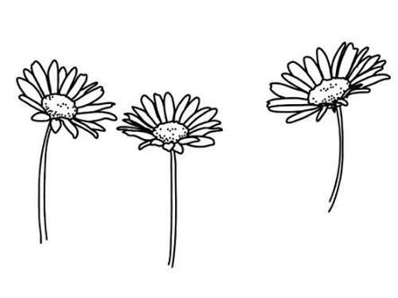Image Result For Tumblr Transparents Black And White Flowers Black And White Stickers Black And White Doodle White Flower Png