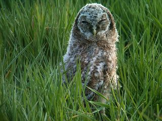 Tawny | Flickr - Photo Sharing!