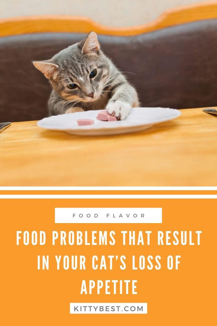 My Cat Isn't Eating! What Can I Do In 2020 Cat loss, Cat